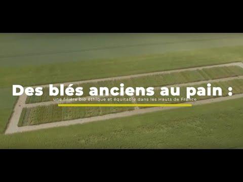 Des blés anciens au pain  une filière bio éthique et équitable dans les Hauts-de-France