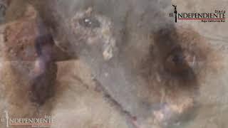 DENUNCIA contra el Proyecto 4 Patas #LosCabos por MALTRATO ANIMAL