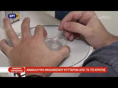 Ανακάλυψη μηχανισμού κυττάρων από το ΙΤΕ Κρήτης | ΕΡΤ