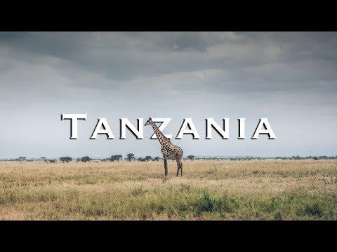 Tarangire National Park: An African Safari Like No Other