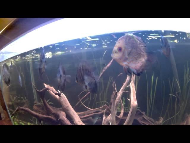 Discus Fish Tank setup