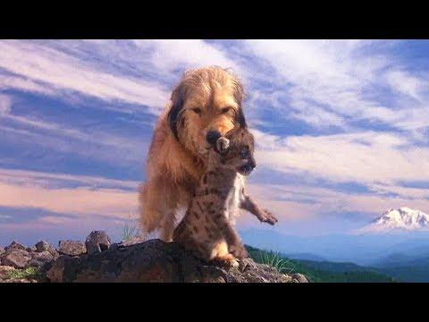一只小狗流落荒野,不但救了四只小豹子,还做起了它们的妈妈