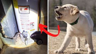 Annoyed Man Ignores His Barking Dog's Warning Until It's Too Late