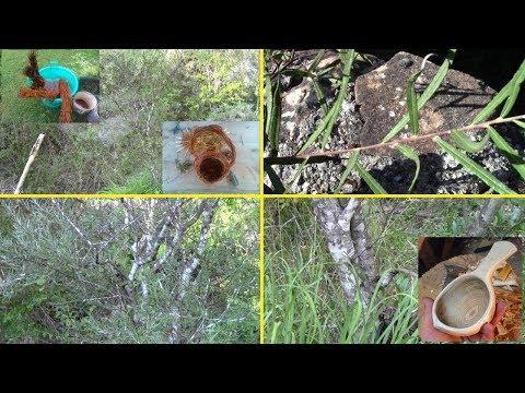 A chi maneggiare un fungo di unghia