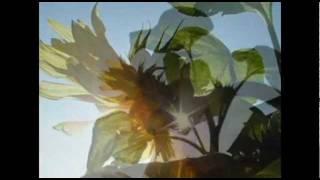 [K-POP Yjb] 임재범 - 해바라기(SunFlower)
