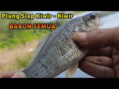 Mancing ikan beunteur