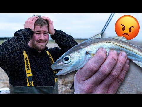 Hvillingfiskeri fra den engelske kyst