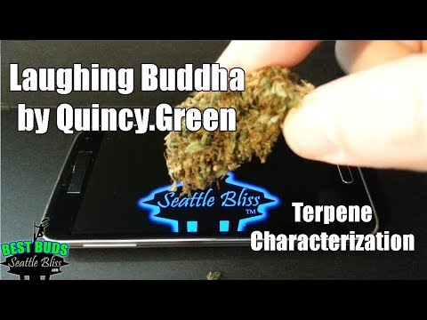 , title : 'Laughing Buddha by Quincy Green terpenes characterization