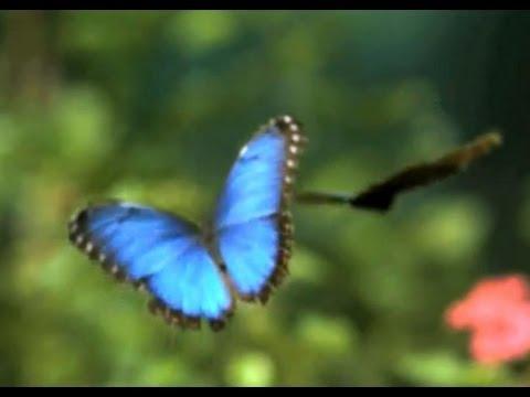 Un Día En La Vida De Las Mariposas…