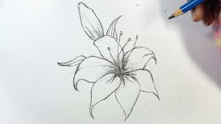 How To Draw A Lily Flower Step By Step   Pencil
