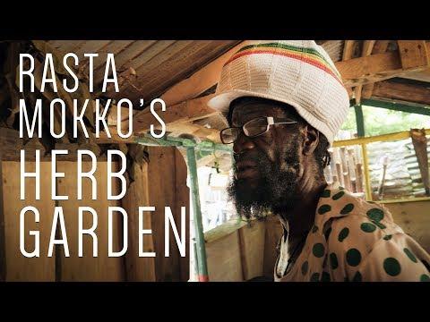 Rasta Mokko's Herb Garden! Chiganit Ponganut Ram Horn Cow Foot…