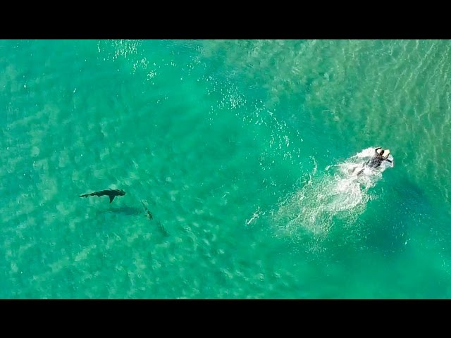 Sharks Approach Surfers!! | DJI Mavic Pro | Incredible 4K Drone Footage | Fort Pierce Inlet