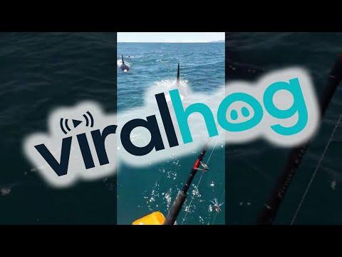 Die Killerwal-Attacke