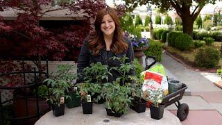 Tomato Growing Basics & Planting Tips! 🍅👩🌾// Garden Answer
