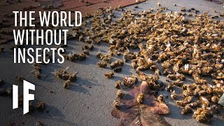 What If Insects Disappeared From The Planet?