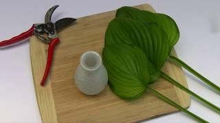 Bring some Guacamole hostas inside with a simple arrangement!