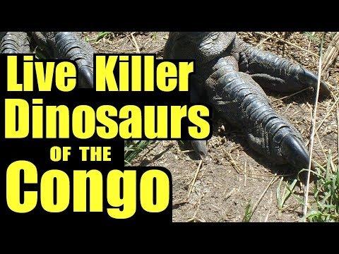 Living Dinosaurs of the Congo ♢ Mokele Mbembe on YOUZEEK com