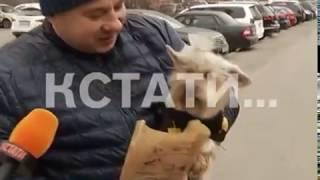 Собачье дело - тенденции гигиены домашних животных дошли до Нижнего Новгорода