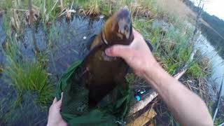 Как ловить линя на поплавочную удочку летом в июле