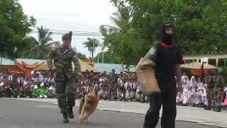 Pertunjukan Anjing Perang