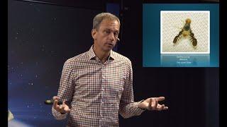 Thumbnail for video: Livets strukturer - Biblisk kreationism avsnitt 3 - Göran Schmidt