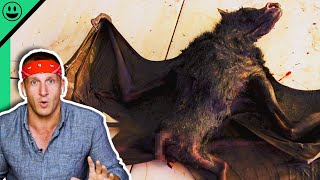 Eating GIANT Bats in Indonesia!! Sonny Reacts To Old Videos!!