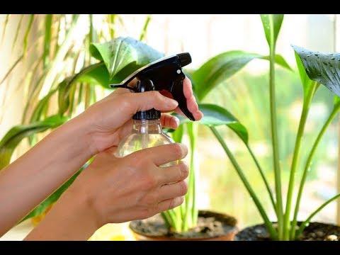 Все ли комнатные растения можно ОПРЫСКИВАТЬ? Как правильно ОПРЫСКИВАТЬ цветы