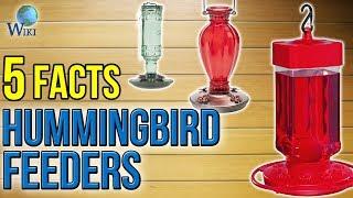 Hummingbird Feeders: 5 Fast Facts