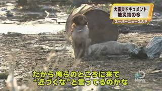 Ultimate Loyalty: Japanese Dog Refuses to Leave Friend Behind Explained