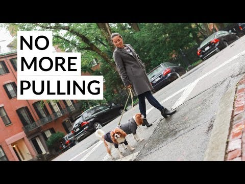 BEST HARNESS FOR DOGS THAT PULL | PetSafe Easy Walk
