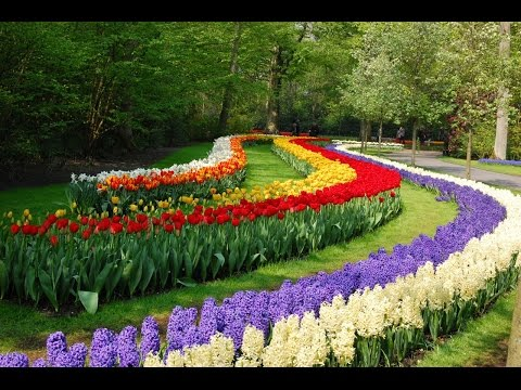 Никитский Ботанический цветущая жемчужин