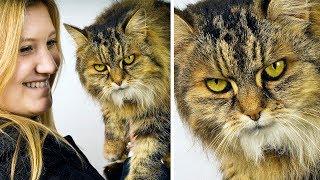 Jak wkurzyć kota na 11 sposobów