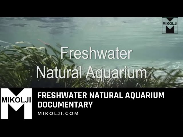 Freshwater Natural Aquarium Documentary