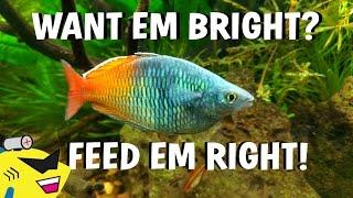 TROPICAL FISH CARE - SECRET TO THE BEST COLORS (IT'S SIMPLE)