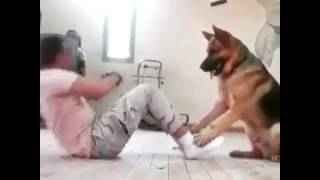 Dog help his owner to do ABS Workout