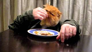 Кошка, котора ест руками