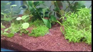 Dennerle s7 and v30 aquatic plant ferilizer test