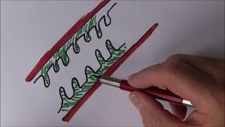 Digestive System 8, Small intestine and absorption full lecture