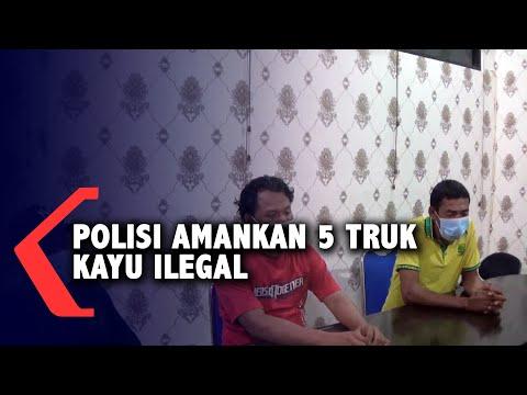 Polisi Amankan 5 Truk Kayu Ilegal