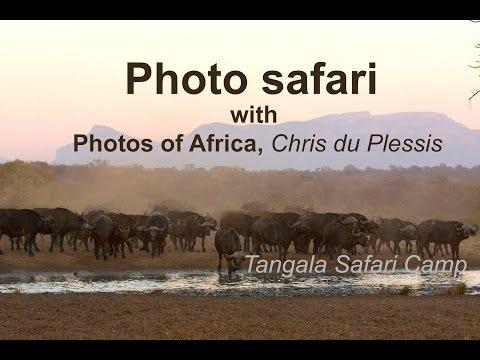 Video of Tangala Safari Lodge