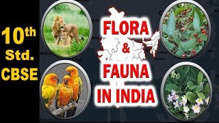 Flora and Fauna in India | 10th Std | Geography | CBSE | Home Revise