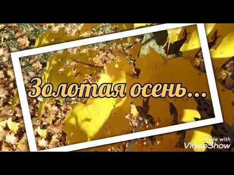 Золотая осень.Осенние зарисовки.Осенний день 2019. autumn