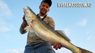Как ловить пинагора на финском заливе