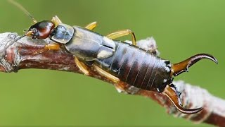 10 BIGGEST Insects Ever Found!