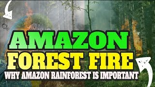 Amazon rainforest Fire: Why is it important to protect the Amazon rainforest?