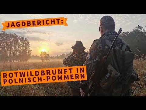 jagdbuechsen: Rotwildbrunft in Polnisch-Pommern – ein emotionaler Jagdbericht mit Video und Ausrüstungs-Check