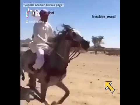 Miya Bhai Stunt