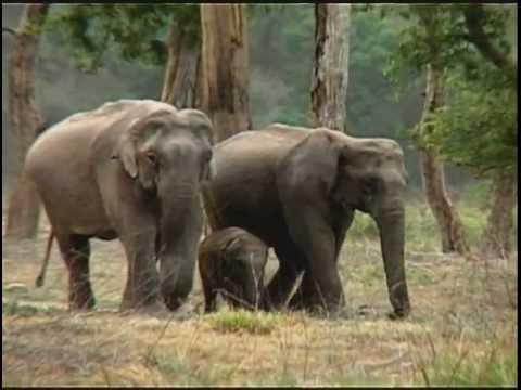 En Inde, la difficile cohabitation des hommes et de l'éléphant d'Asie