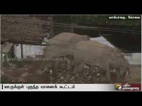 Wild-Elephants-causing-livelihood-damage-residents-worried-Valparai