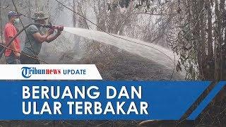 Kebakaran Hutan di Riau, Ditemukan 2 Ekor Beruang dan 1 Ekor Ular Mati Terbakar